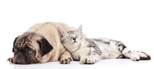 Welches Hunefutter, welches Katzenfutter