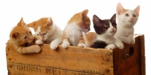 Katzenrassen Bilder