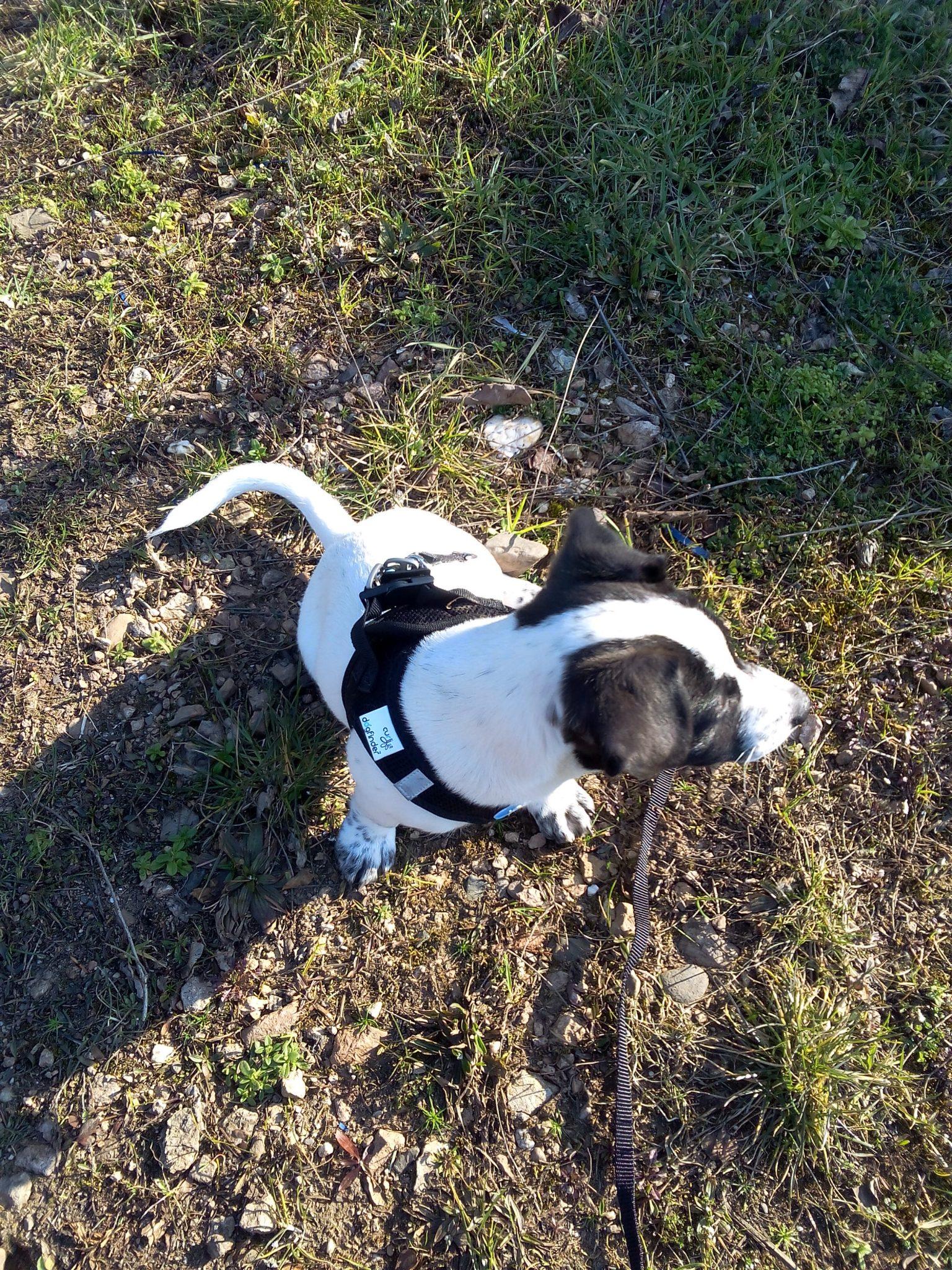 Jack Russell Terrier Bild von Miguel