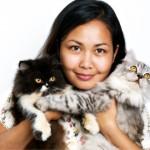 Katzenrasse Perser Katzen