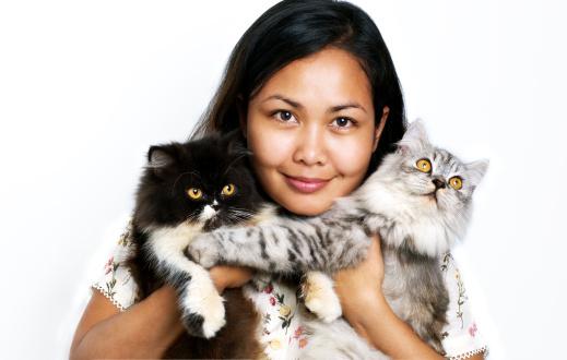 Perser Katzenfutter