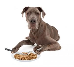 Hundefutter ohne Zusatzstoffe?