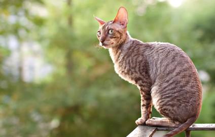 Welches Katzenfutter für kastrierte Katzen?