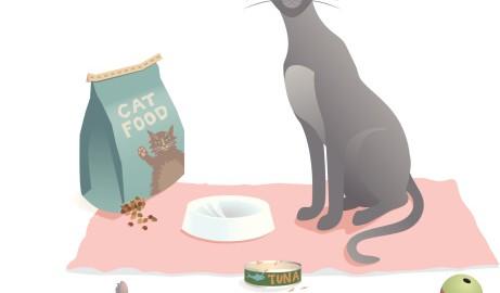 Katzenfutter Proben