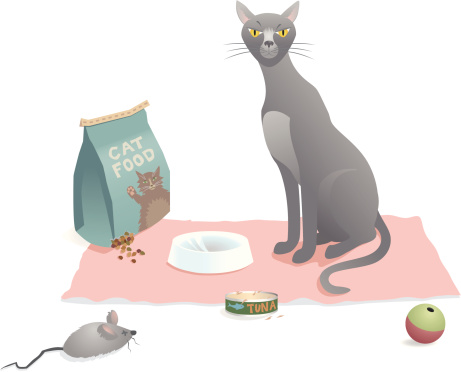 Amerikanisch Kurzhaar Katzenfutter