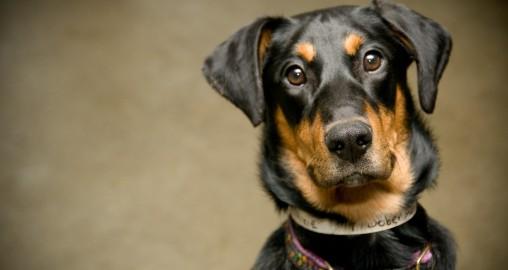 Wie viel Rohasche sollte im Hundefutter sein?