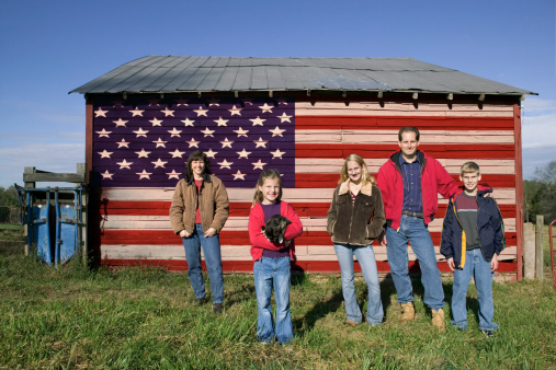American Wirehair Bilder
