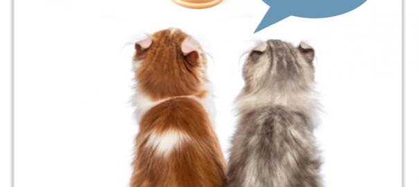 Welches Katzenfutter ist bei Allergie geeignet?
