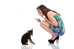Hundefutter als Leistungsfutter