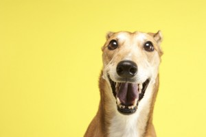 Greyhound Hundefutter