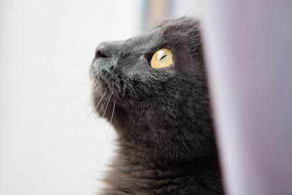 Kartäuser Katzenfutter