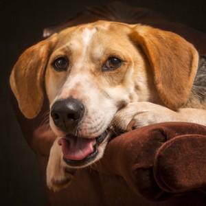 Rohasche im Hundefutter