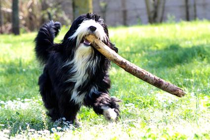 Bobtail Hundefutter