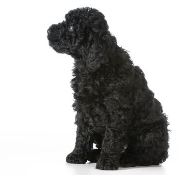 Barbet Hundefutter