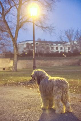 Bergamasker Hirtenhund Hundefutter