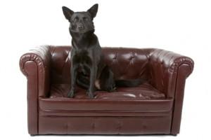 Der Hundefutter Test: Nassfutter von guter Qualität