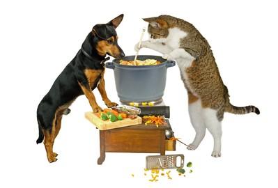 Katzenfutter selber machen