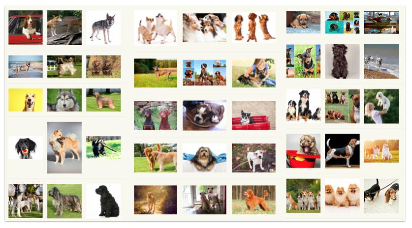 Wie viele Hunderassen gibt es?