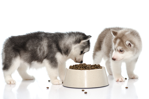 Make Your Own Puppy Dog Food