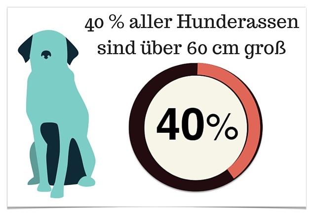 Grosse Hunderassen - 40 prozent aller Hunderassen sind über 60 cm